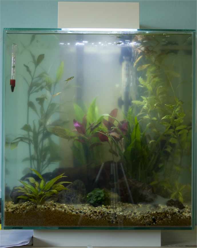 Cloudy water in a cycled tank halp the planted tank forum for Cloudy water in new fish tank
